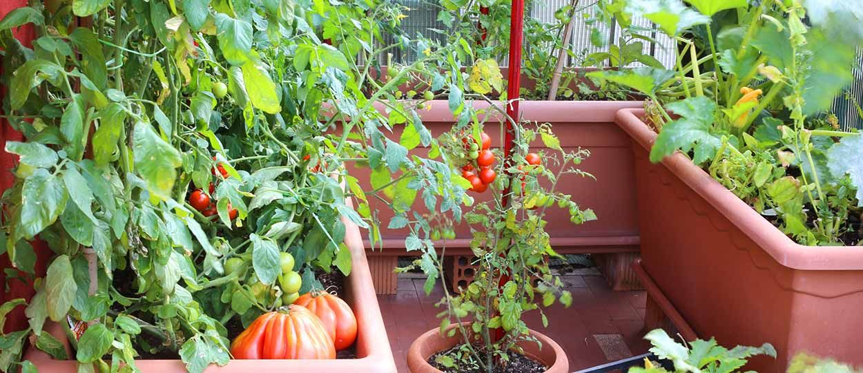un potager en permaculture sur votre balcon c est possible