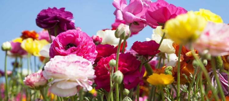 Jardin : quelles fleurs vivaces peut-on planter au printemps ?