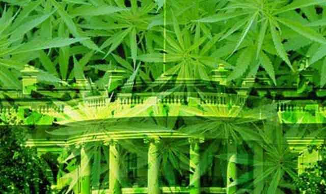 marijuana white house