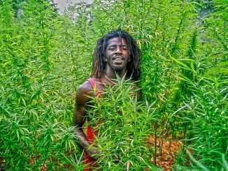 Jamaican Marijuana
