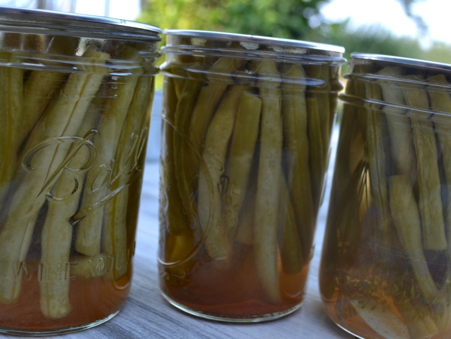 Canned dill beans preserved for winter eating