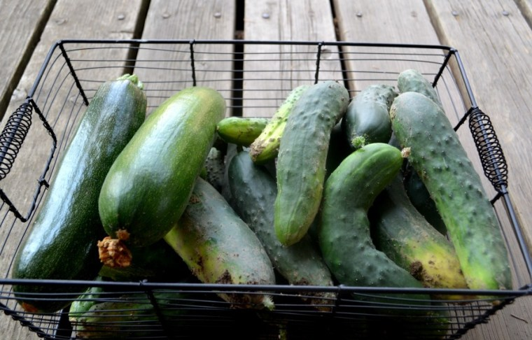 Freshley picked zucchini and cucmbers ready to canned
