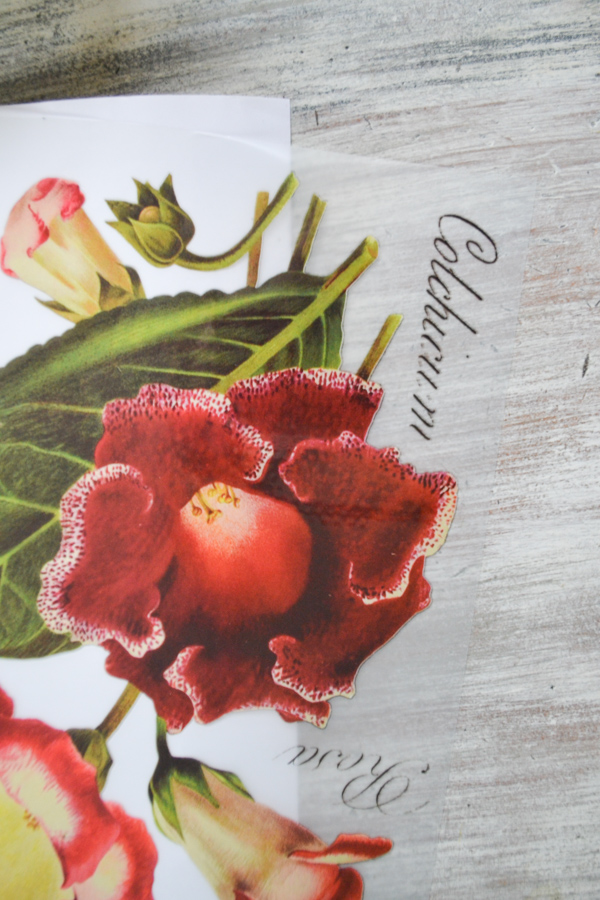 A close up of a red iris flower and leaf colored ink transfer