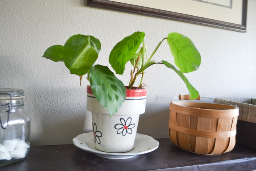 A green plant in a white and orange pot sitting on a shelf