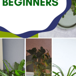 A collage of green indoor plants with text overlay
