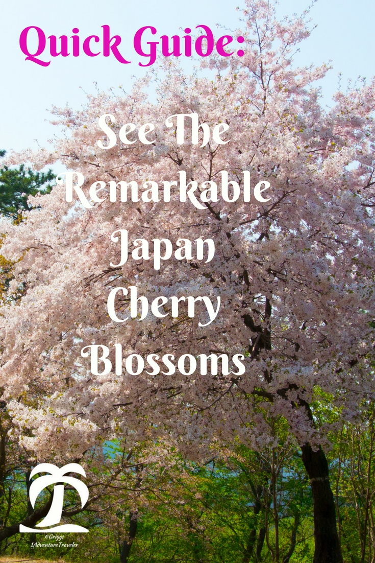 Quick Guide: See The Remarkable Japan Cherry Blossoms - 1AdventureTraveler | Spring is coming and the Japan Cherry Blossom Blooms will be happening. Here is your Quick Guide to help you through this magnificent blooming!