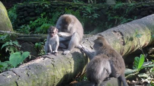 Monkey forest Ubud
