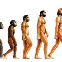Ser humano evolui?