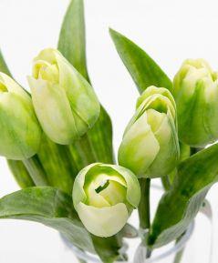 Tulipán zeleno-žltý