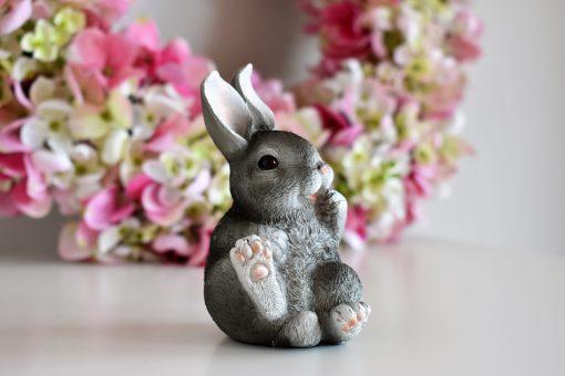 Zajačik sivý