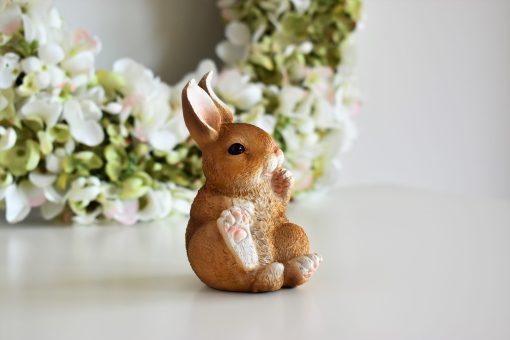Zajačik hnedý
