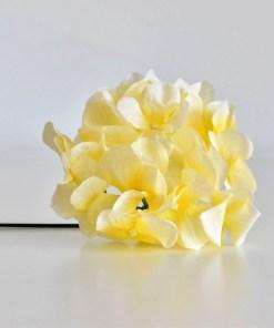 Hortenzia žltá