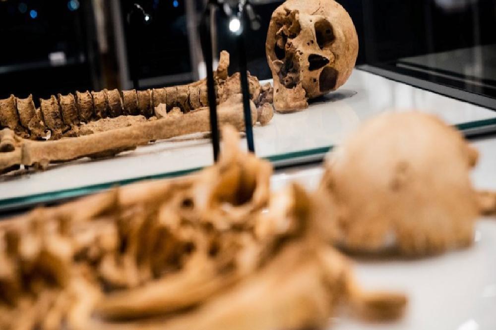 iki viking savascisinin kalintilari danimarka ulusal muzesinde 1
