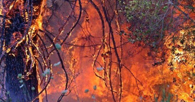 Bakanlar yangınlarla ilgili son durumu paylaştı
