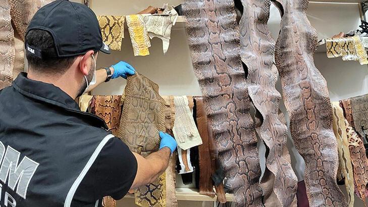 piyasa değeri 200 bin tl! nesli tehlikedeki yılanların derisi ele geçirildi