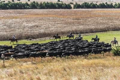 cattledrive6_6400x4300