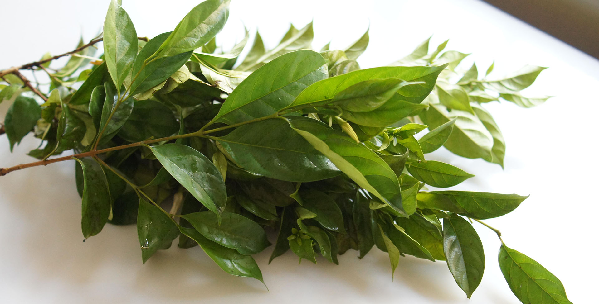 How to identify Atama leaves which is used for cooking Abak