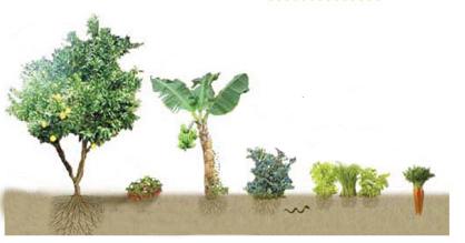 foodforest.jpg