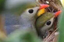 Rêver d'oiseau