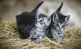 Rêver de chat