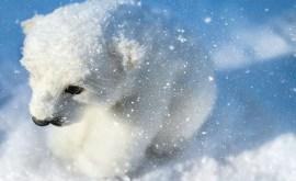 Rêver d'un ours polaire