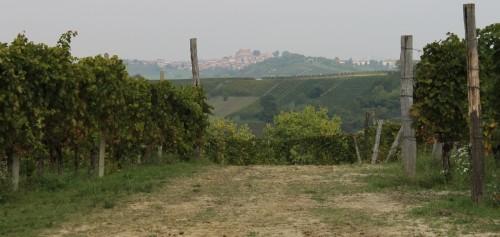 Ruche vineyard 1