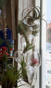 About form and function Dekorative bubbles til de sjove airplants Læs mere om About form and function her