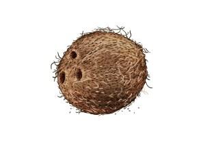 Kokospalme Weltacker