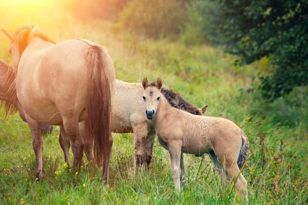 We aren't breaking horses | Notes on Parenthood