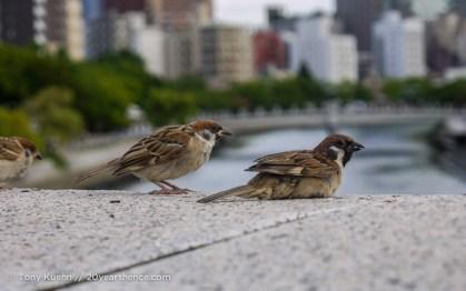 Birds of Hiroshima