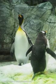 Penguin! 05