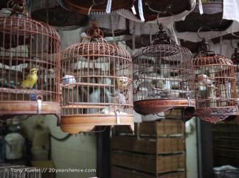 Birdcages again