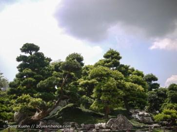 Manicured shrubs