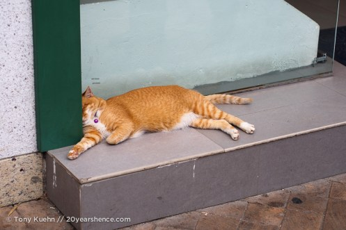Just one of the many lazy cats we saw