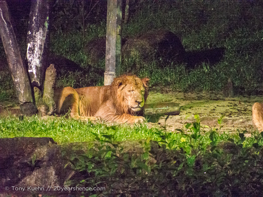 Look! A night lion! He's so majes... hey, wake up! Night lion? Hello?
