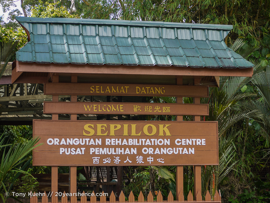Sepilok Orangutan Rehabilitation Center, Borneo