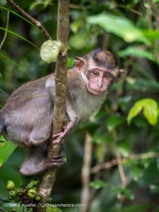 Tiny monkey in a tree