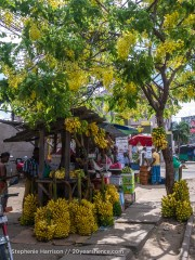 A beautiful banana stand, near Baticaloa, Sri Lanka