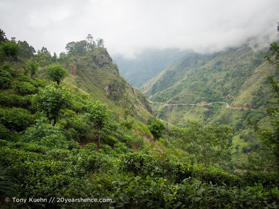 The tea plantations of Ella, Sri Lanka