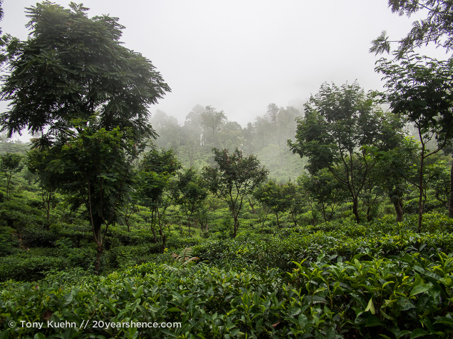 The tea plantations of Ella, Sri Lanka