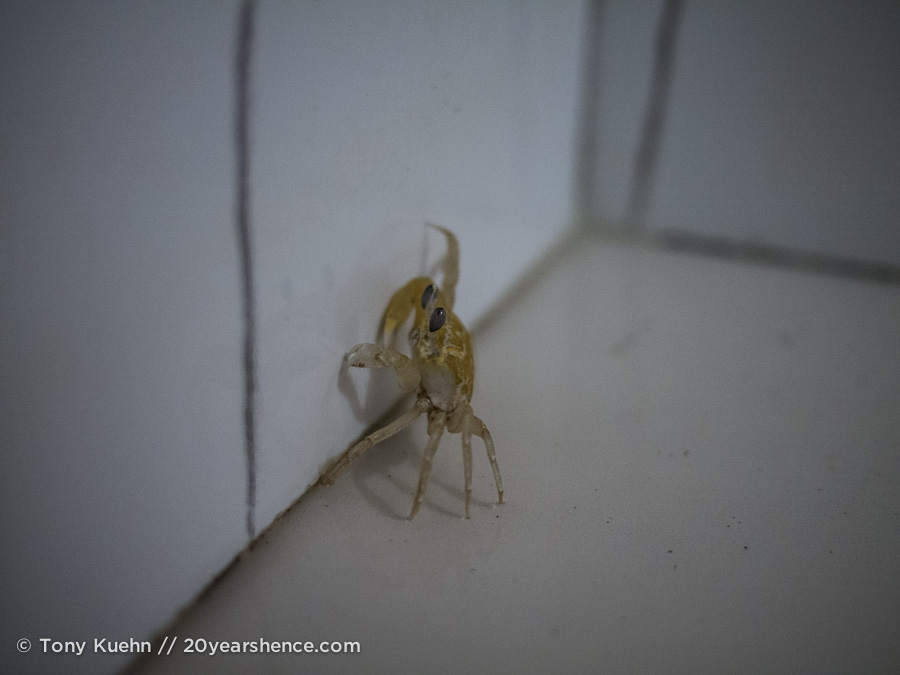 Our shower crab in Arugam Bay