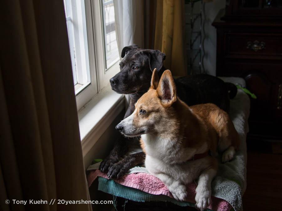 Our dogs, Toronto, Ontario
