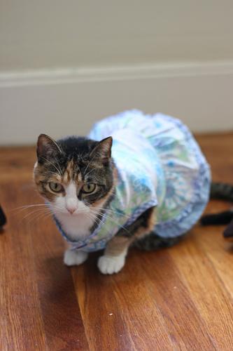 Sabine & Pandora's Summer Dresses