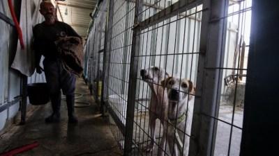 مأوى الكلاب