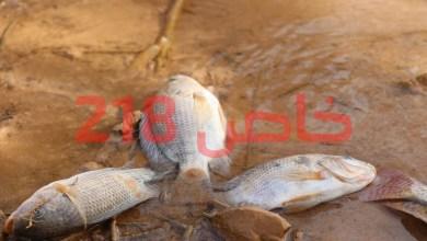 أسماك نافقة - سد وادي كعام