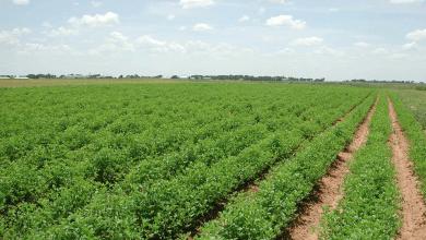 زراعة محاصيل - صور أرشيفية