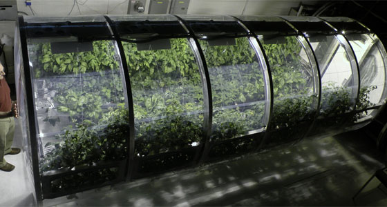 Are we 10 years away from being able to grow crops on Mars?