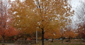 Fall at MHS