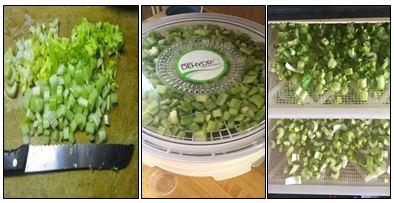 Celery Dehydrating