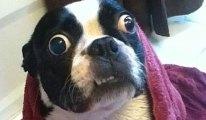 Ultimate Funny Dog Videos Compilation